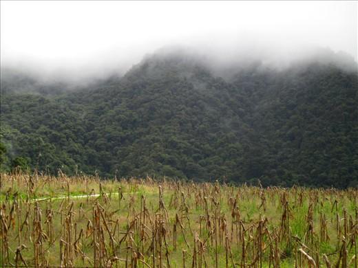 Cloud forest, Volcan Baru National Park