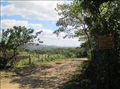 Homestay 'Las Palmeras' in Miraflor Reserve: by kirstenvelthuis, Views[1183]