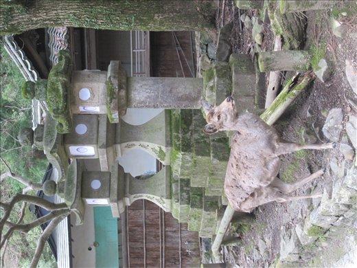 Torii in Nara