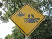 CRAB CROSSING!: by kitschey, Views[1061]