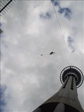 Another Sky Tower pic. But, a person is jumping off it this time!! AHHHHH (It's a bungy jump attraction for those who don't know). : by kiwi_kerry, Views[241]