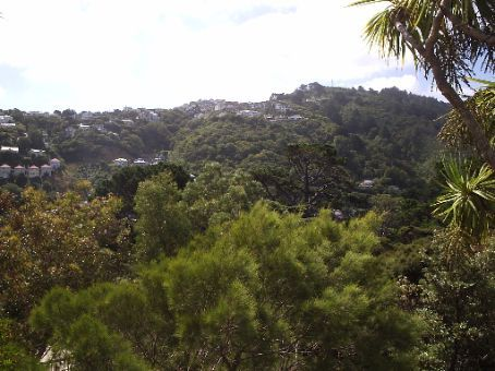 The background of my ME picture. In the Kelburn Botanical gardens  taking a look at some of the greenery.