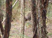 The first kiwi I saw!: by kiwiaoraki, Views[252]
