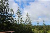 by kiwiaoraki, Views[37]