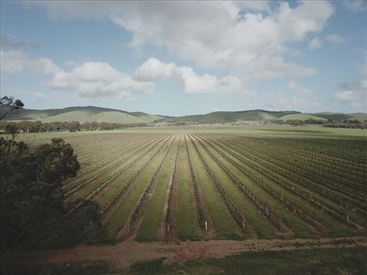 The famed Barossa vineyards