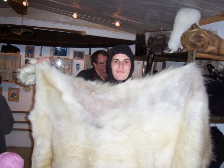 Polar bear fur