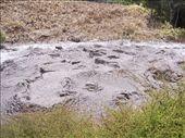 Bubbling mud pool: by kiwiaoraki, Views[254]