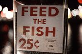 only 25 cents for watching fish MMA: by klauslundi, Views[140]
