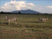 Zebra!!!: by klnjaa, Views[252]