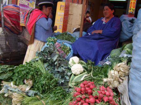 Nestled in her stall, La Paz, Bolivia