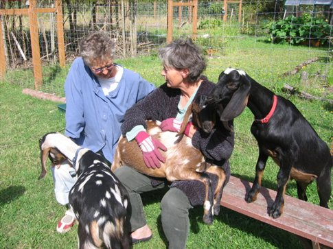 Sandy, her sister and some of the goats