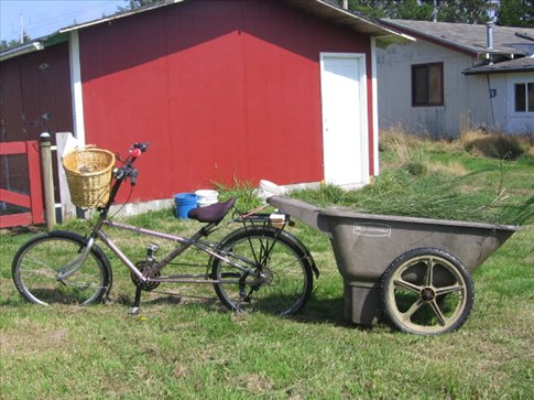 Most days this week we went on a carbon cycle.  We basically ride are bikes around town, collect invasive species and berries for the goats, chickens, and turkeys, feed them, then fill the barrel up with manure and take it back to be composted in the garden.
