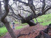 Los Osos Oak Reserve: by kp207105, Views[50]