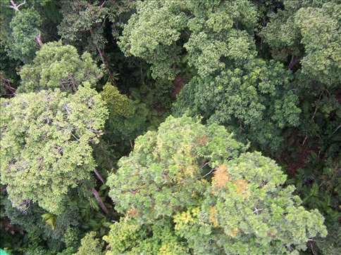 Looking down on the rainforest canopy