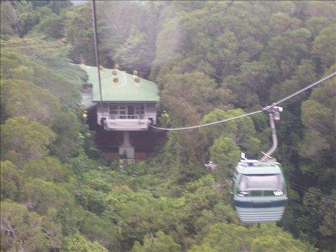 Skyrail over the rainforest
