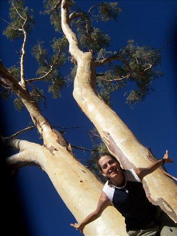 I Love Gum Trees!
