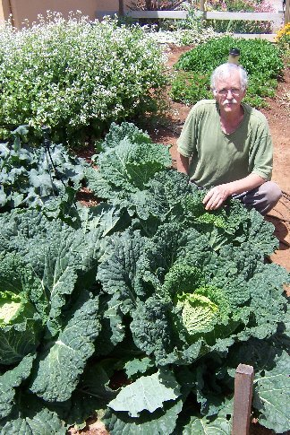 Steve Solomon (my gardening guru) with one of his cabbages
