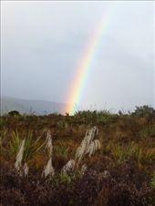 Rainbow near Tongariro NP: by kristamrome, Views[210]