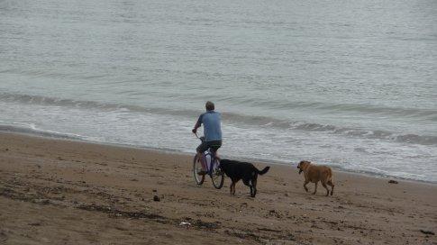 Beach at Paihia