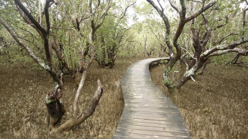Mangroves boardwalk near Paihia