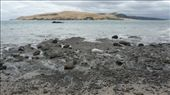 Hokianga Harbor with sand dunes in background: by kristamrome, Views[165]