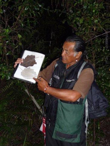 Maori guide Bill on Footprints tour