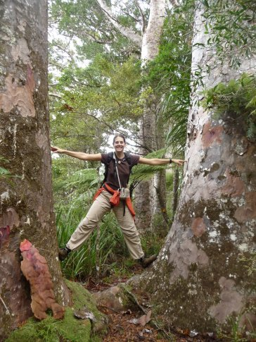 Enjoying the Kauri trees