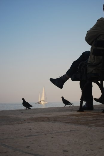 An older man leisurely sits gazes at the slow pace of the sail boat in the distance
