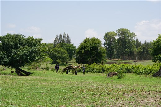 cart on the fields by Blue Nile Falls