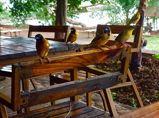 birds on a chair