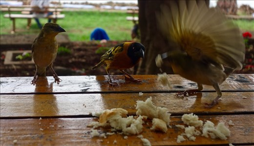 birds, don't mess with my bread
