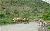 camel road block: by krodin, Views[127]