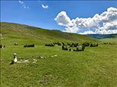 Horses grazing: by krodin, Views[63]
