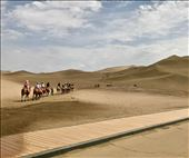 camel trek: by krodin, Views[41]