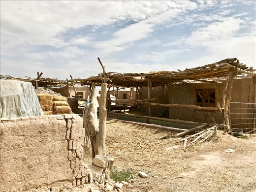 camel sheds