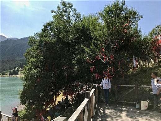 Sacred Elm tree, Tian Chi