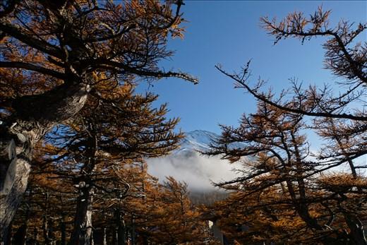 Mt. Fuji through the trees
