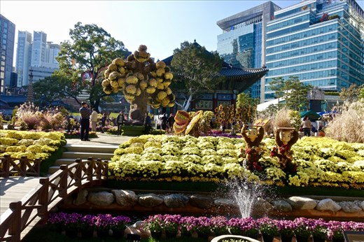 Yogyesa Chrysanthemum Festival