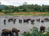 Pinawalla Elephant Orphanage: by kurenai, Views[646]