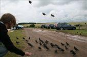 those awesome birds: by l-a-u-r-e-n, Views[173]