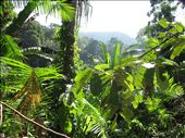 jungle!: by landon_marie, Views[144]