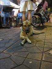 Soi Rambuttri, Bangkok, I couldn't resist this dapper little guy.: by landon_marie, Views[207]