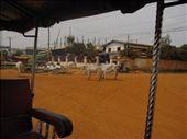 garbage cows, garbage cows!: by landon_marie, Views[167]
