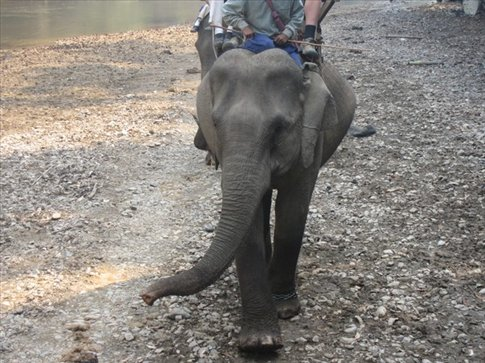 Oh, hello! - A human family with a young boy & girl on elephants passed us, what a family vacation!