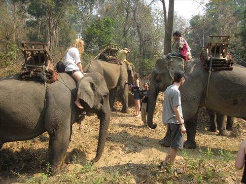 elephant party!
