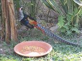 Chiang Mai Zoo - pretty!: by landon_marie, Views[220]