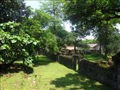 a lush, forgotten garden: by landon_marie, Views[242]
