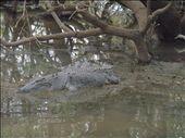 Crocodile spotting, Mary River: by lauraste84, Views[591]