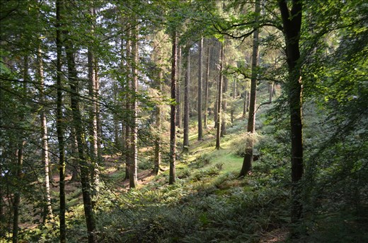 Solo hike in the forest along Lake Windermere