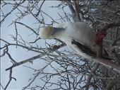 red footed boobie: by ldeutch, Views[446]